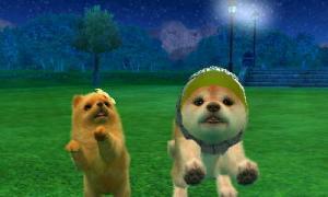 dogs047.jpg