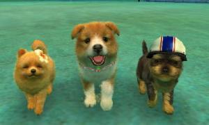 dogs053.jpg