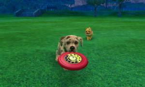 dogs089.jpg
