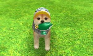 dogs119.jpg