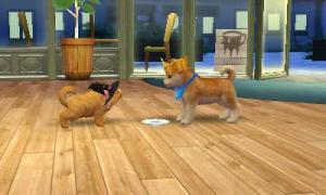 dogs138.jpg
