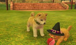 dogs141.jpg