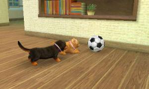 dogs172.jpg