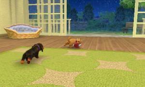 dogs173.jpg