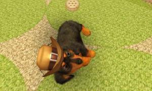 dogs227.jpg