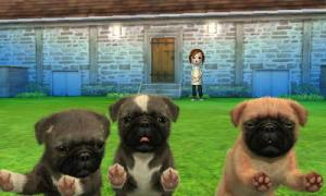 dogs266.jpg
