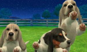 dogs267.jpg