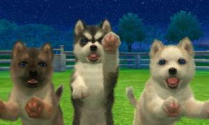 dogs268.jpg