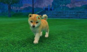 dogs272.jpg