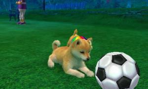 dogs273.jpg