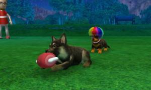 dogs275.jpg