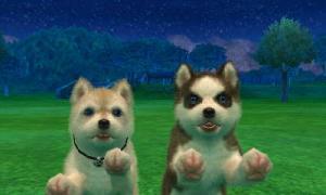 dogs310.jpg