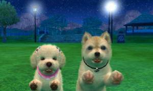 dogs312.jpg