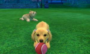 dogs318.jpg