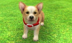 dogs325.jpg