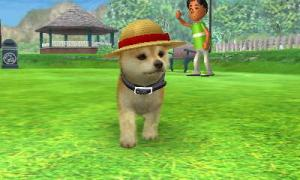 dogs326.jpg