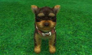 dogs327.jpg