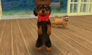 dogs329.jpg