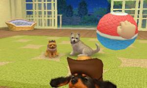 dogs334.jpg