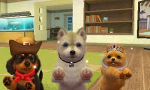 dogs335.jpg