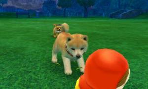 dogs336.jpg