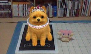 dogs337.jpg