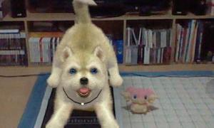 dogs339.jpg