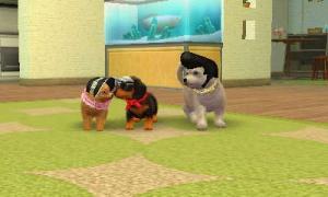 dogs362.jpg