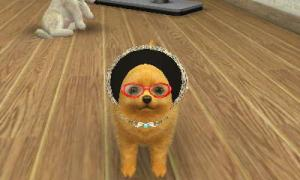 dogs363.jpg