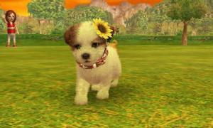 dogs364.jpg