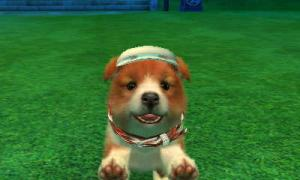 dogs365.jpg