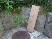 asagaya-momozonogawa13.jpg