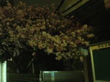 asagaya-street103.jpg