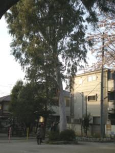 asagaya-street86.jpg