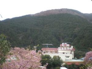 kawazu16.jpg