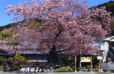 kawazu19.jpg