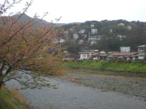 kawazu4.jpg