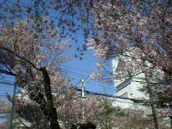 mitaka-street31.jpg