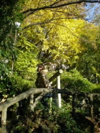 sendagaya-inari3.jpg