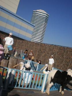toshimaku-ikebukuro14.jpg