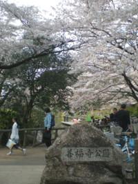 zenpukuji-park1.jpg
