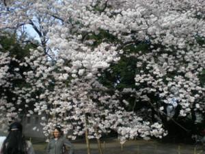 zenpukuji-park11.jpg