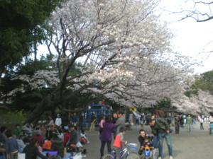 zenpukuji-park12.jpg