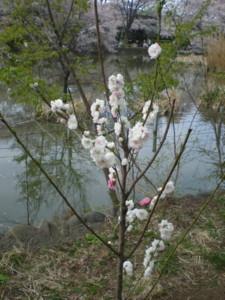 zenpukuji-park18.jpg