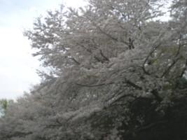 zenpukuji-park19.jpg