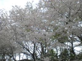 zenpukuji-park20.jpg