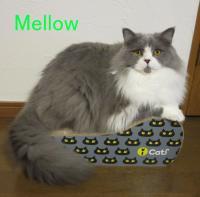 Mellow プロフィール_NEW_縮小