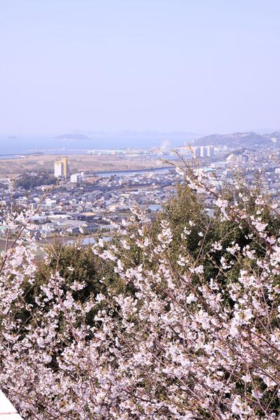110410-桜-2