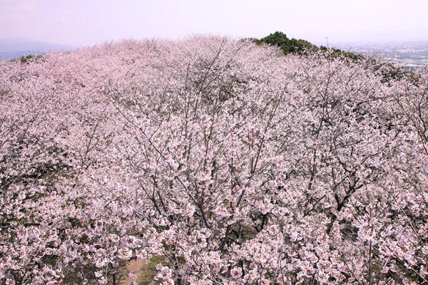 110410-桜new