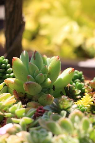 garden100502-1.jpg